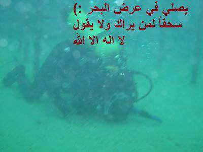 1001853_567059226677619_1177381555_n